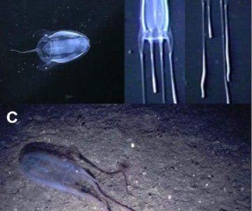 FB IMG 1528198354464 360x301 - Peligro en nuestras Playas por apareamiento de meduzas (COMPARTE)