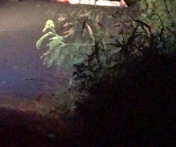 IMG 20190810 WA0000 360x301 - Asesinan de varios disparos a reggetonero JENAY en Villas Del Toa en Toa Alta